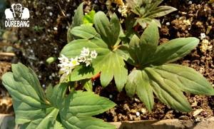 두레방 마당이자 순희 언니의 정원에 핀 식물들
